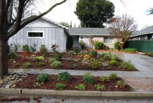 Average house with California native plants
