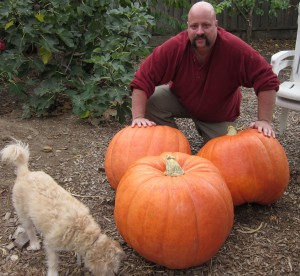 Brian pictured with impressive pumpkins, grown without fertilizers.