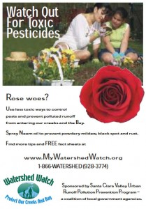 Rose Woes?