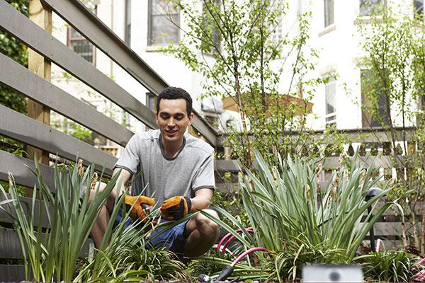 Hire a Green Gardener