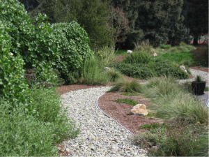 Mary likes to incorporate pervious surfaces and native grasses in her garden designs
