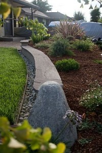 Mulch can prevent weeds and reduce watering.