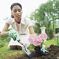 Woman setting flowers in garden